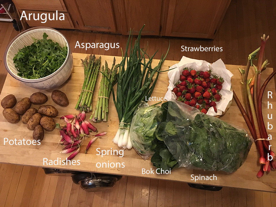 Week 1: A Box, A Plan, An Ethnically Ambiguous Salad